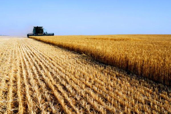 Alcune riflessioni sull'economia che governa l'agricoltura