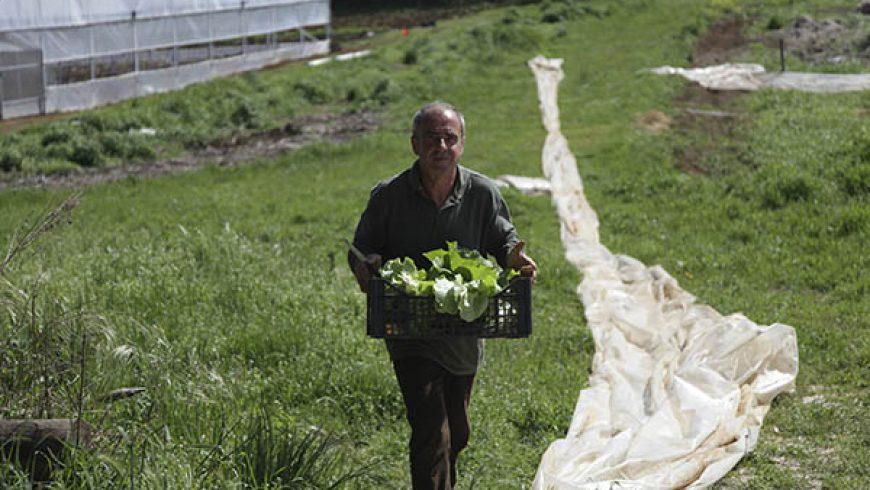 Corsi di Agricoltura Biodinamica 2013-2014