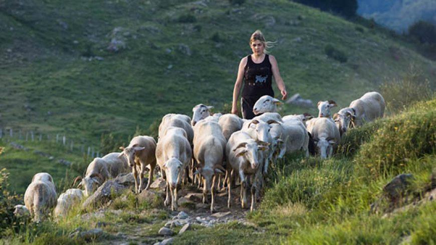 Mollo tutto e vado a fare il pastore: storie di donne e dell'agnello di Zeri