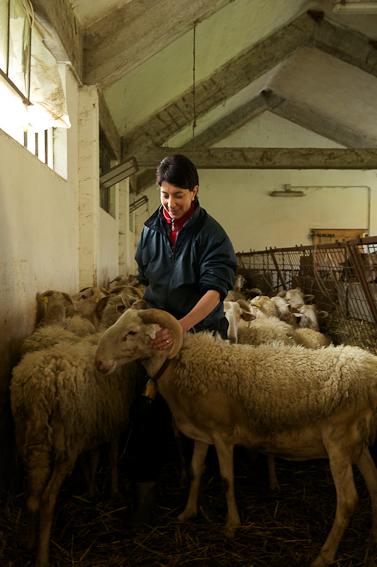 azienda agricola boccea patrizia donna pastore