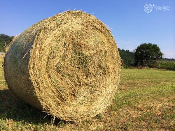 azienda agricola boccea balle di fieno