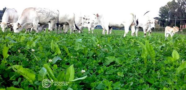 azienda agricola boccea bovini al pascolo agricoltura biologica roma
