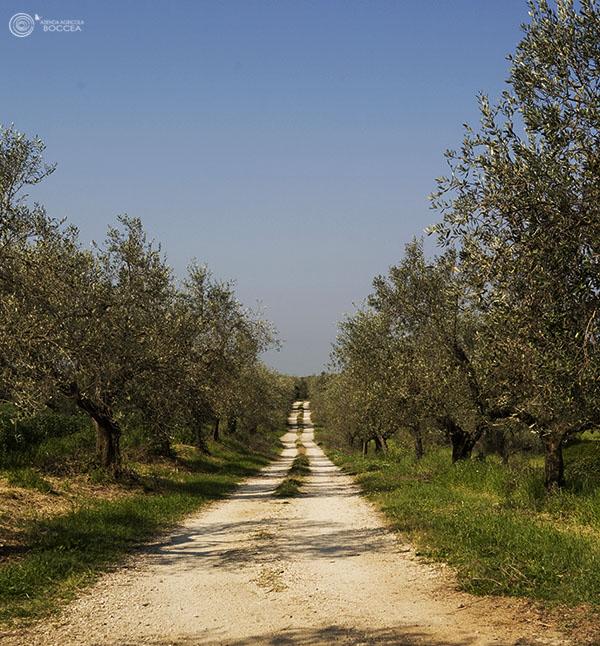 Un Anno da Dimenticare per l'Olio d'Oliva