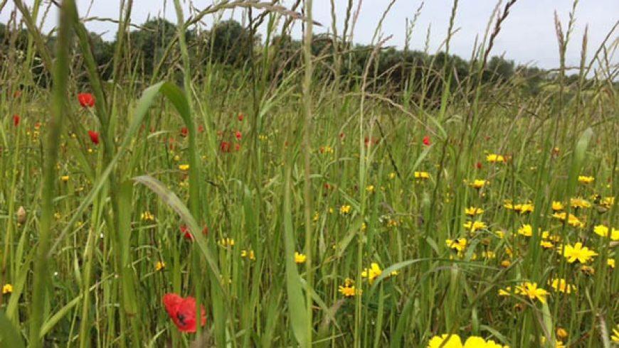 La Diversificazione delle Pratiche Colturali riduce le Differenze Produttive tra Agricoltura Biologica e Convenzionale