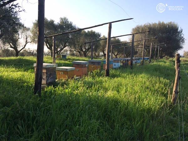 agricola boccea agroecologia differenze tra agricoltura biologica e convenzionale9_