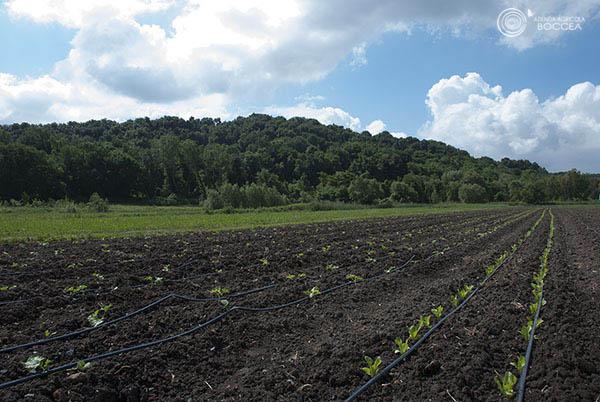 agricola boccea agroecologia differenze tra agricoltura biologica e convenzionale_a_