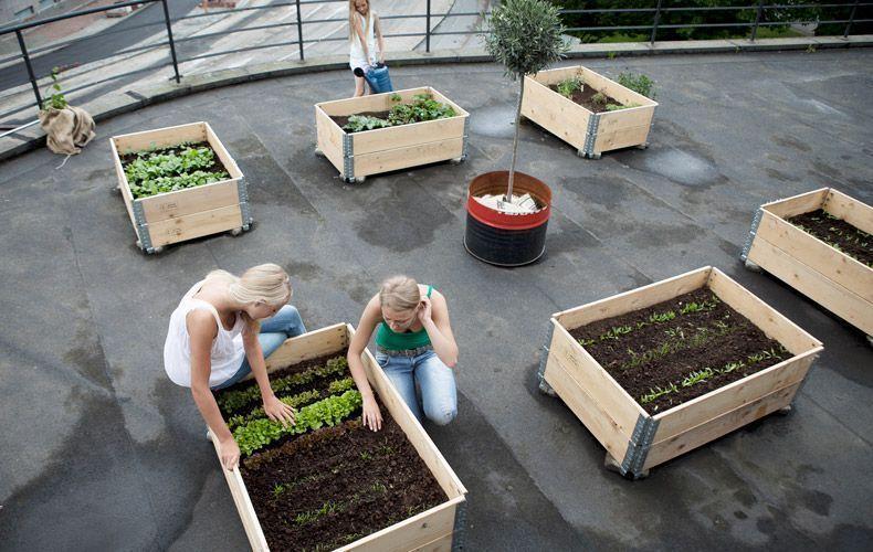 azienda agricoal boccea orto in casa orto in balcone