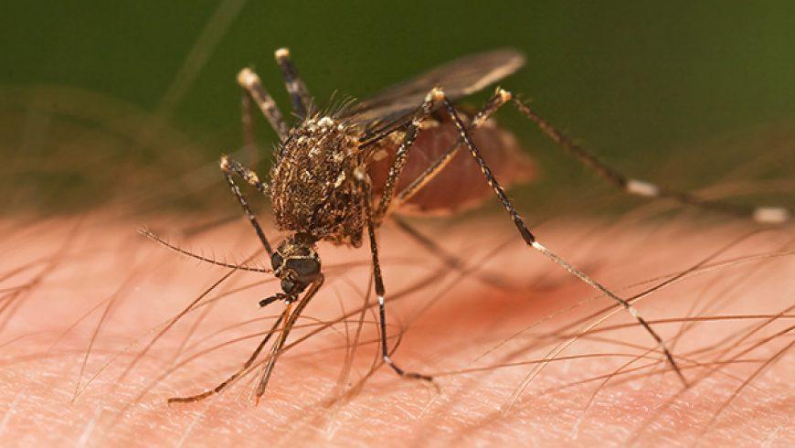 10 Cose da Sapere sulle Zanzare