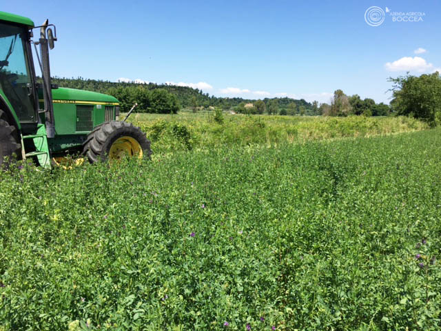 azienda agricola boccea agricoltura bio roma fieno di erba medica1 copia