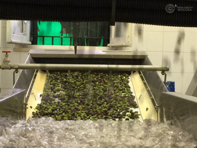 agricola boccea agricoltura bio olio bio solaria 2015 vendita roma4 copia