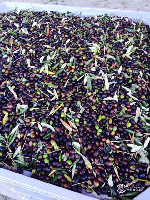 agricola boccea agricoltura bio olio bio solaria 2015 vendita roma6 copia