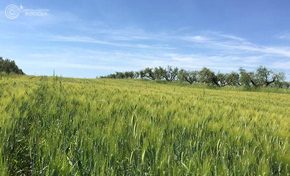 agricola boccea - agricoltura biologica biodinamica roma 2