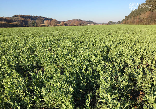 agricola boccea - agricoltura biologica biodinamica roma 7