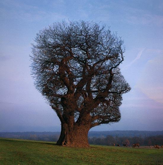 Come la Meditazione Può Cambiare il Cervello (e Non Solo)