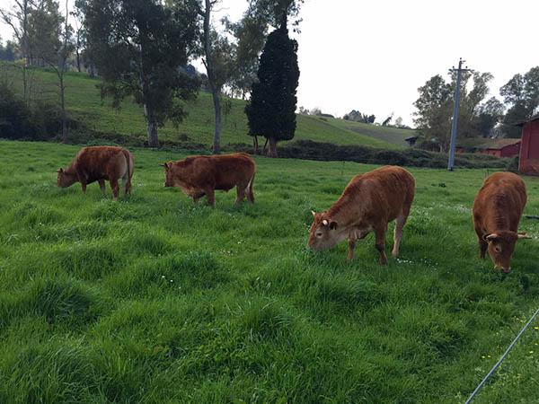 Boccea Grass Fed Beef