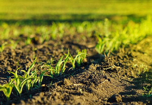 Un articolo de Il Foglio si Scaglia Contro gli Alimenti Bio e Noi Rispondiamo