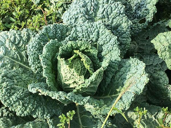 agricola boccea agricoltura verdure bio roma lazio