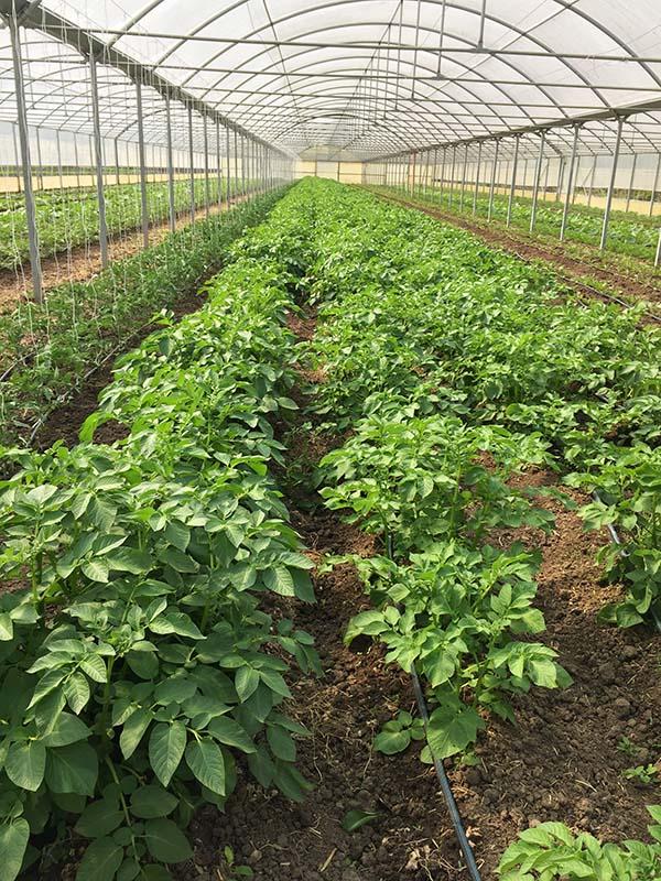 agricola boccea agricoltura bio verdure bio roma