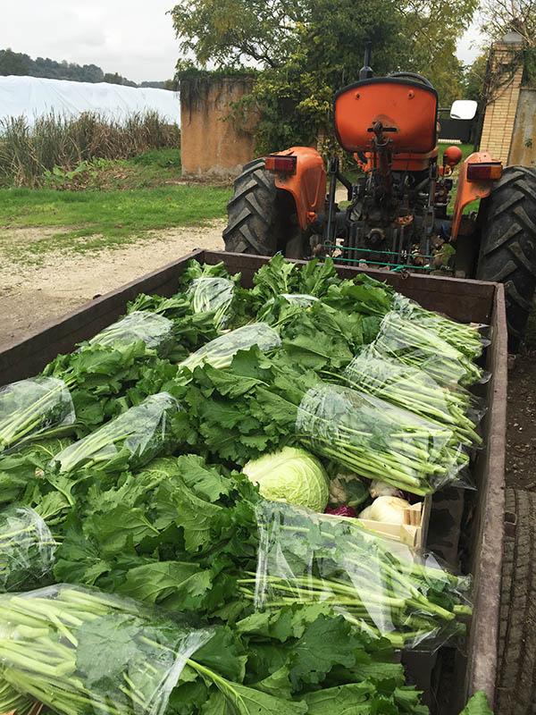 agricola-boccea-_agricoltura-verza-bio-roma-lazio-verdure-ortaggi-orto-bio-mele_