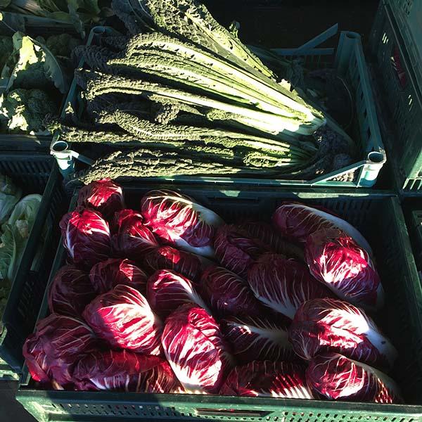 azienda-agricola-boccea-_agricoltura-verza-bio-roma-lazio-verdure-ortaggi-orto-bio-mele_
