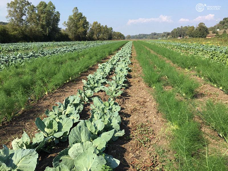 azienda agricola - boccea autunno agricoltura bio roma