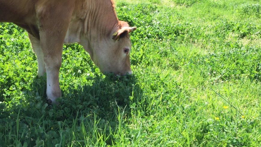 Grande Successo del 35° Convegno Sull'Agricoltura Biodinamica