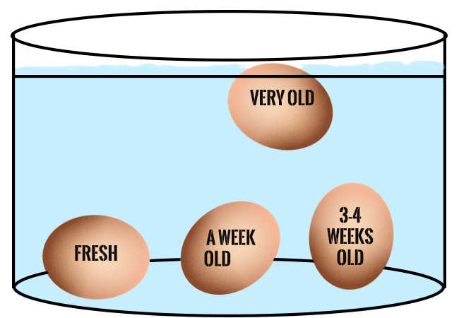 agricola_ boccea - agricoltura - bio roma test se uova sono buone fonte corriere della sera
