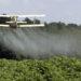Cosa ci può Dire la Presenza di Pesticidi Nella nostra Urina Riguardo al Cibo Biologico?