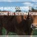Seminario 7-8 giugno | Pratiche agroecologiche: La Gestione del Sistema Foraggero