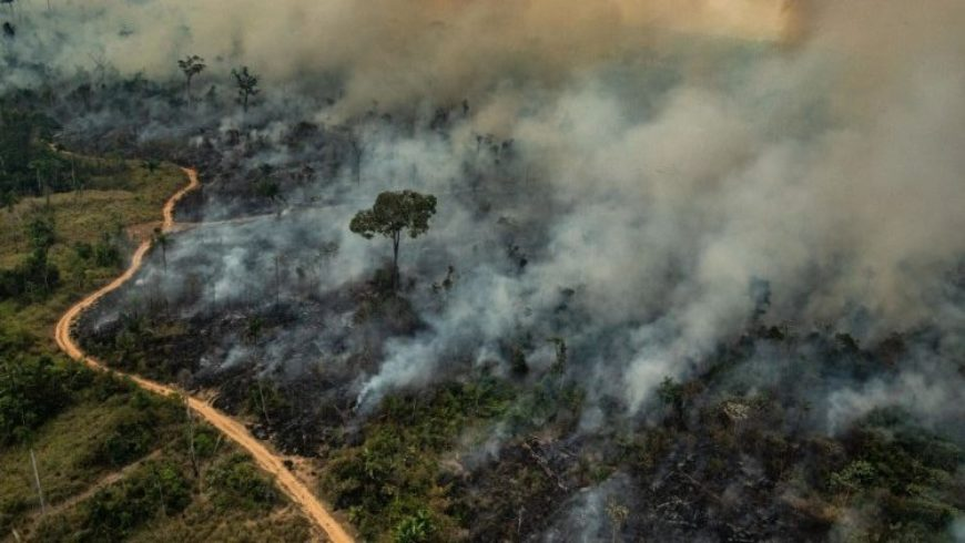 Tutti Parlano di CO2 e dell'Amazzonia | Risposte alle Domande che Ci Facciamo