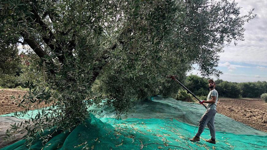 Vi Racconto l'Olio Extravergine Biodinamico Solaria 2019