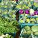 L'Orto Biodinamico, L'Agroecologia e l'Autunno