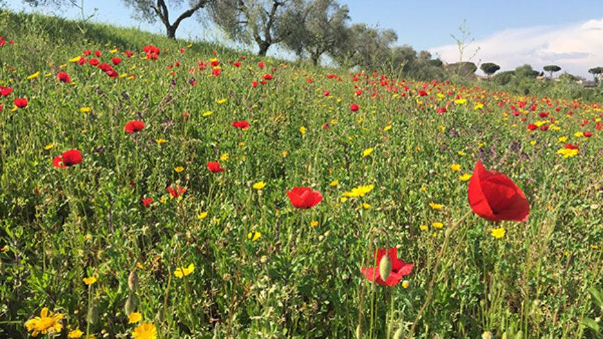 Biodiversità ed ecosistemi a Roma: Azienda Agricola Boccea, un'azienda speciale