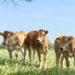 Allevamenti intensivi e allevamenti al pascolo: una differenza di importanza vitale!